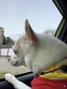 Pets of ECE: Nacho