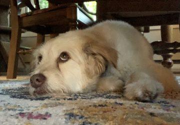 Pets of ECE: Jasper